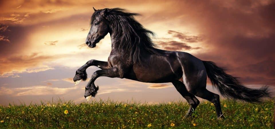 Sonhar com cavalo – Principais significados para esse sonho
