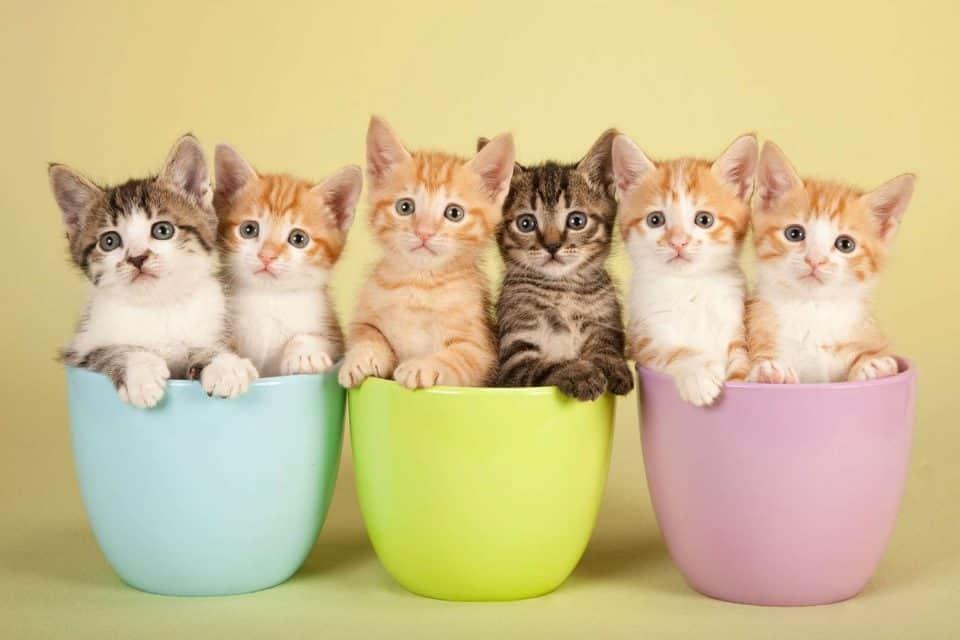 Sonhar com filhote de gato: significados e interpretações