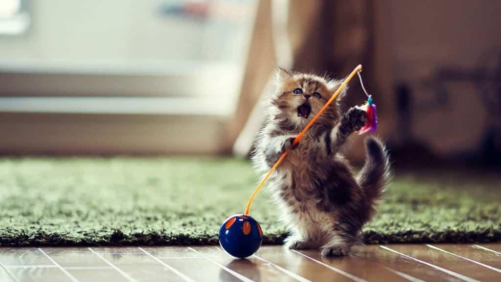 Sonhar com filhote de gato: principais significados e interpretações